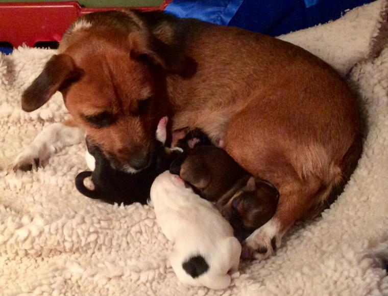 Holly + her three puppies