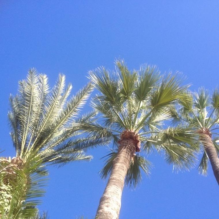 Blue skies and Palm trees in Cyprus