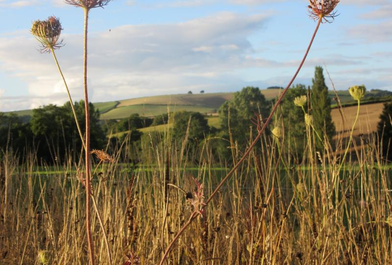 Meadow Seedheads from Harefield Barn