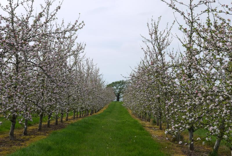 Spring in the Orchard at Harefield Barn
