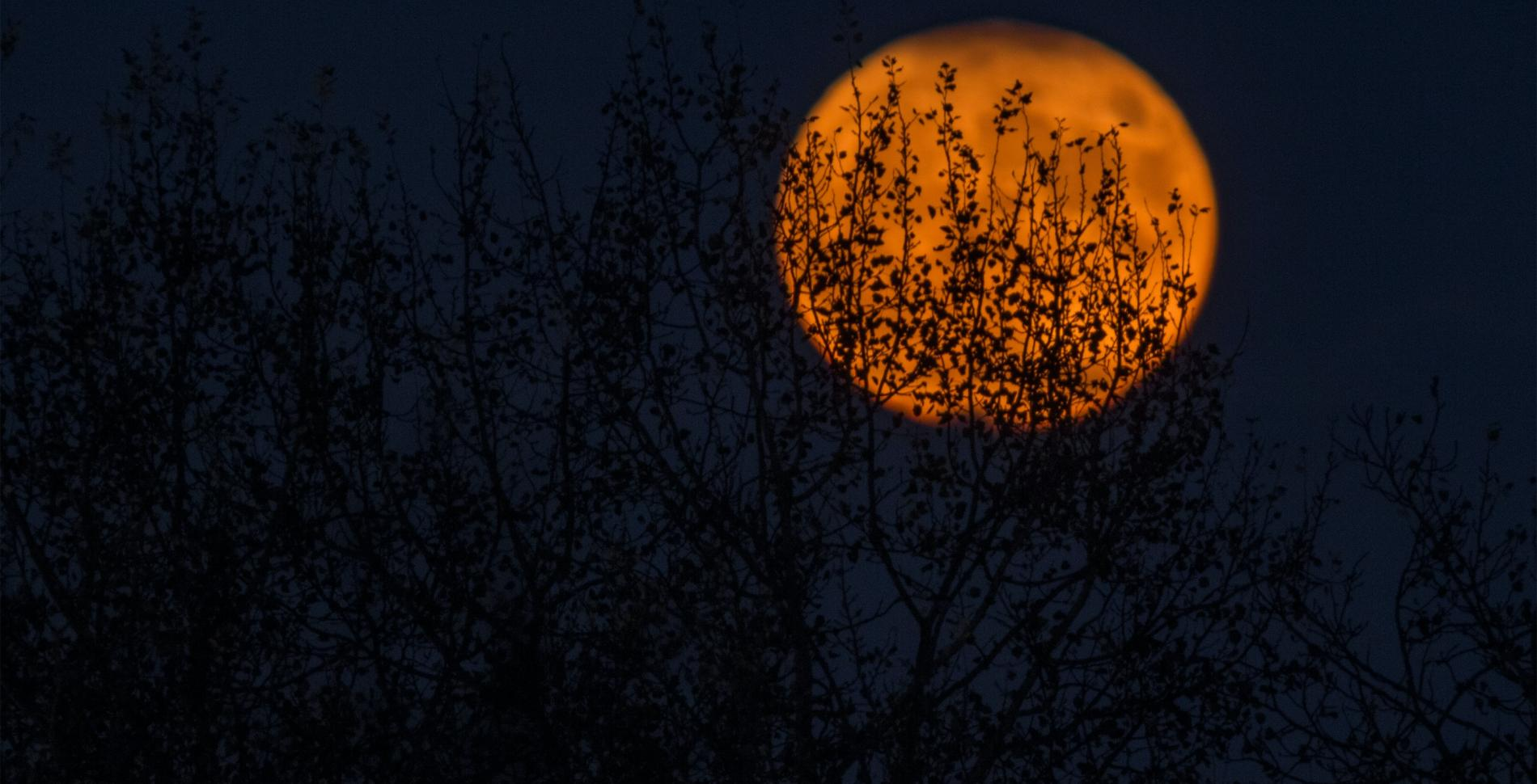 Orange moon behind trees
